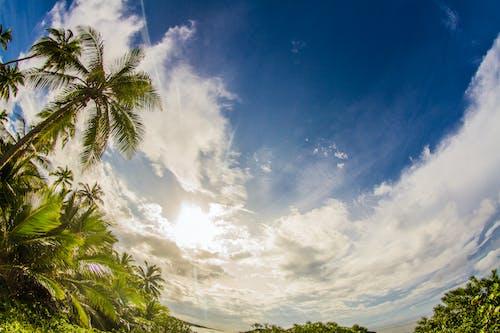 Darmowe zdjęcie z galerii z błękitne niebo, chmury, dramatyczny, drzewa