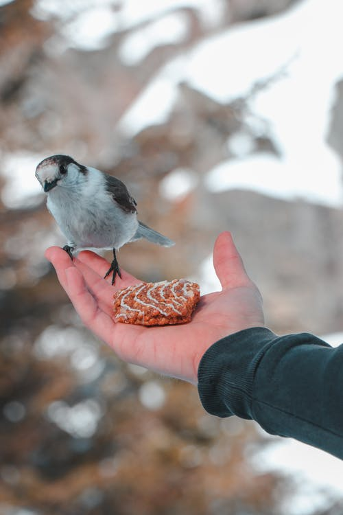Selective Focus Photography of Bird Perching on Human Hand