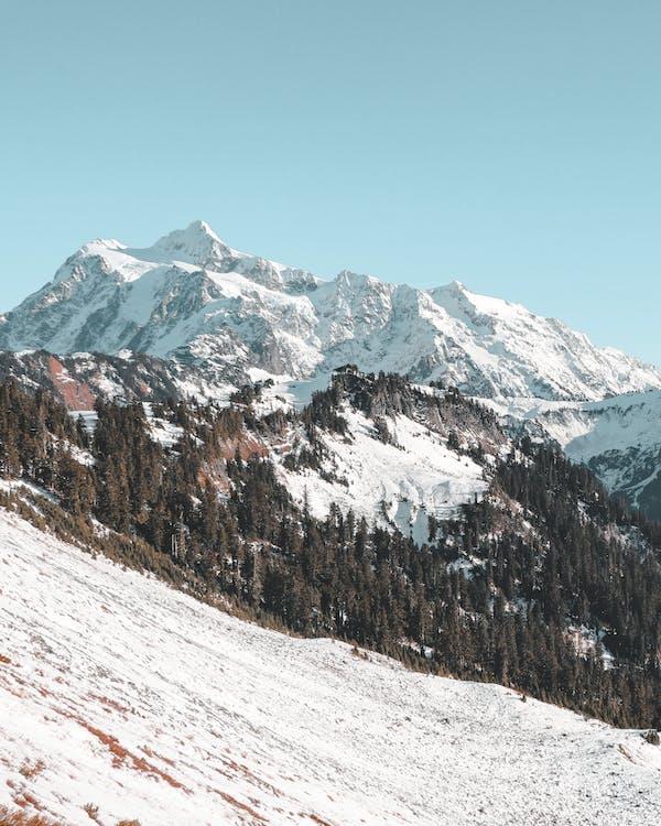 alpejski, drzewa, góry
