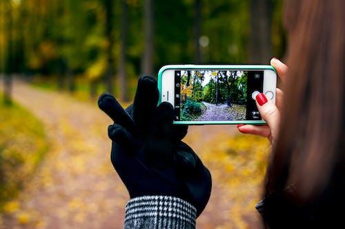 Foto d'estoc gratuïta de a l'aire lliure, arbres, artefacte, boscos