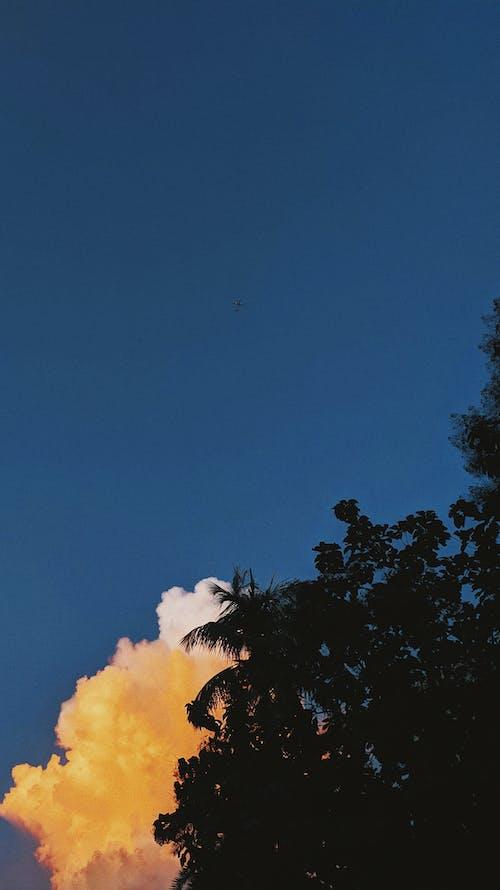 Imagine de stoc gratuită din aeroplane, apus, avion, cer albastru