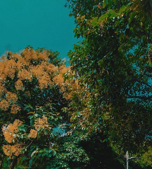 Imagine de stoc gratuită din arbori, cer senin, tapet, vsco