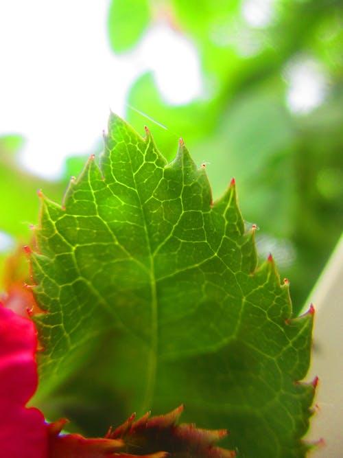 Kostnadsfri bild av grönt löv, mörkgröna växter
