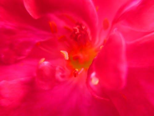 Kostnadsfri bild av vackra blommor