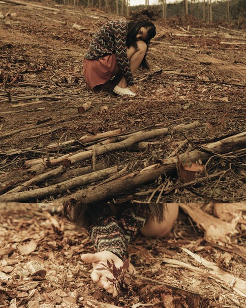 Gratis lagerfoto af brænde, døde træer, jord, kvinde