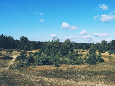 Free stock photo of landscape, forest, trees
