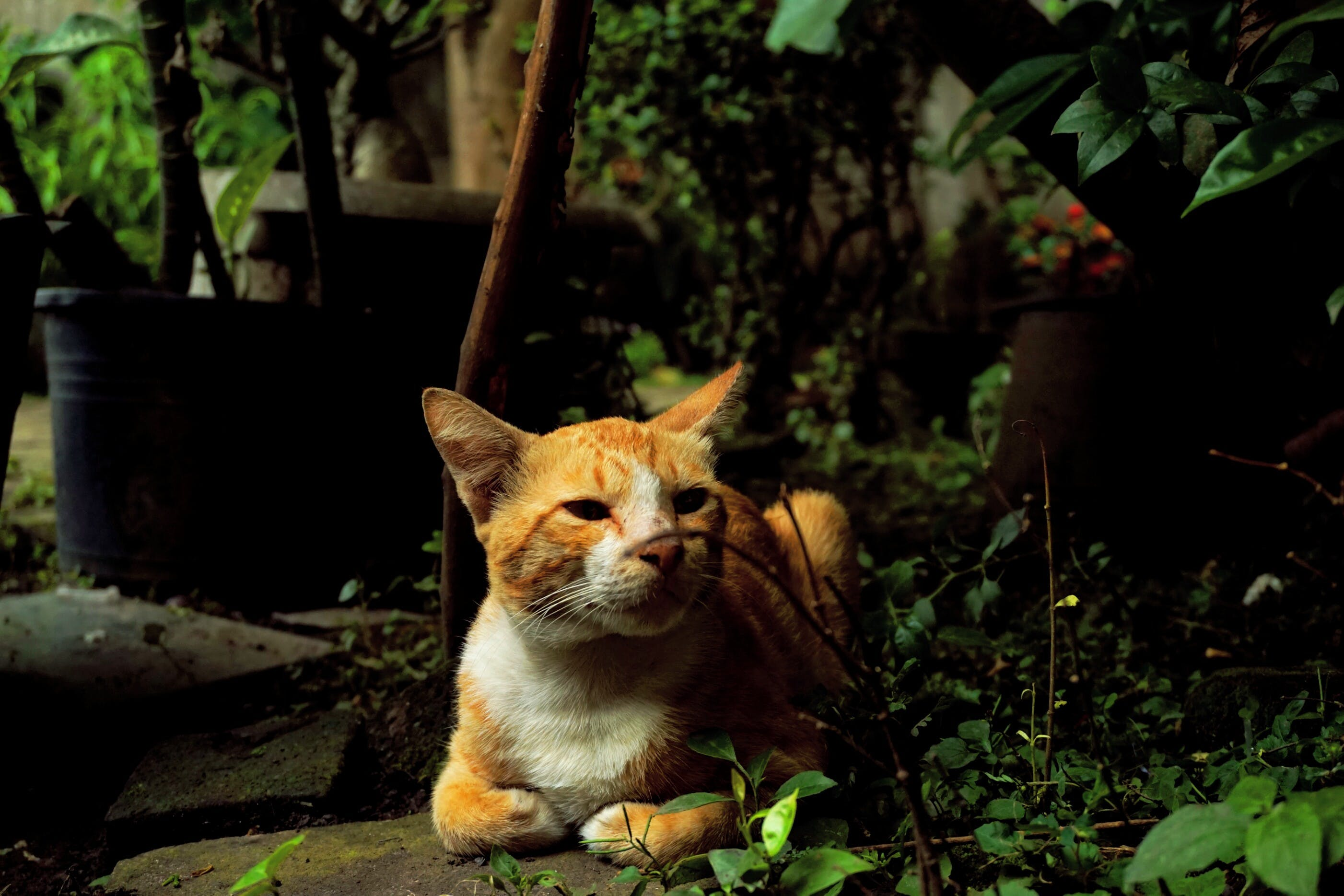 Free stock photo of nature, animal, cute, cat