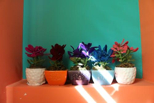 Photos gratuites de étagère, fleur, magnifiques fleurs