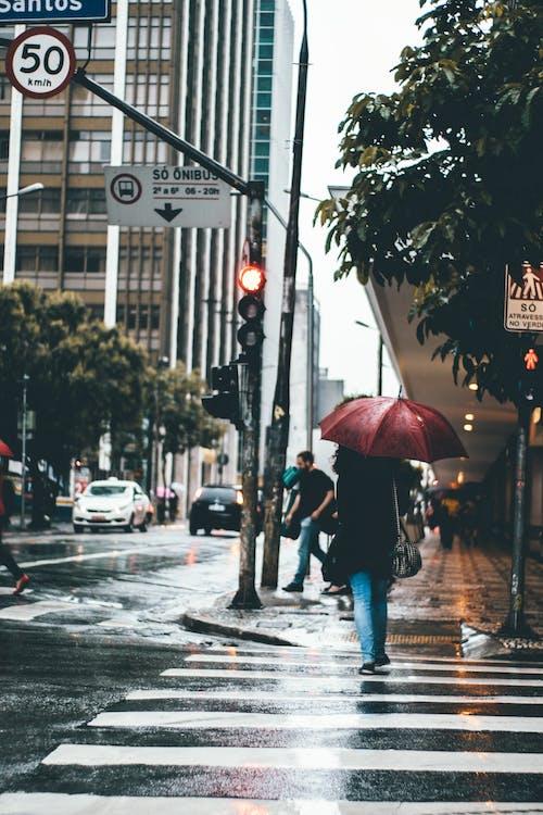 Woman Holding Umbrella Crossing Pedestrian Lane