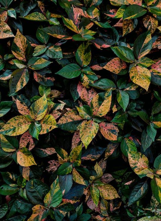 나뭇잎, 다채로운, 색깔