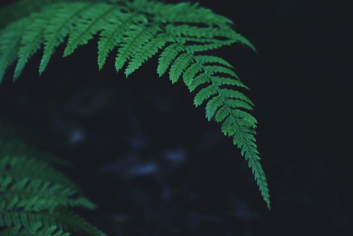 고사리, 나뭇잎, 녹색