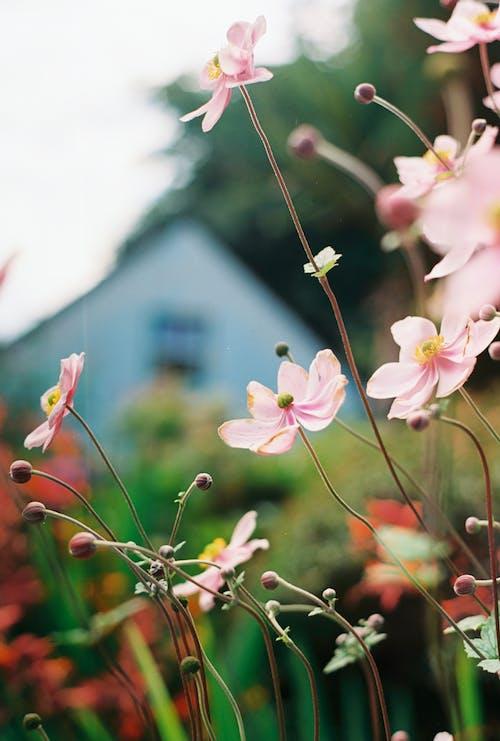 Бесплатное стоковое фото с 35 мм пленка, аналоговая фотография, красивые цветы, пленочная фотография