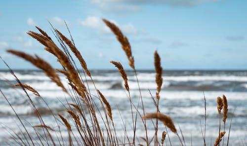 Gratis lagerfoto af hav, natur