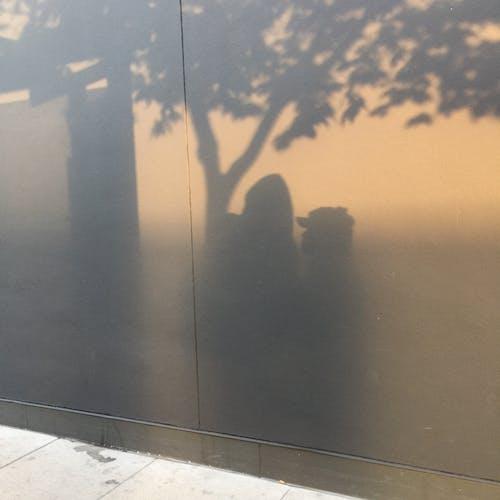 คลังภาพถ่ายฟรี ของ คน, ต้นไม้, ผนัง, เงา