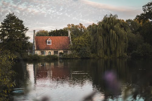 Free stock photo of duck, duck pond, house, lake