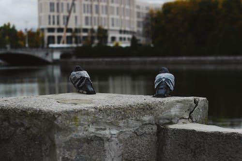Darmowe zdjęcie z galerii z miasto, mińsk, ptak, rzeka