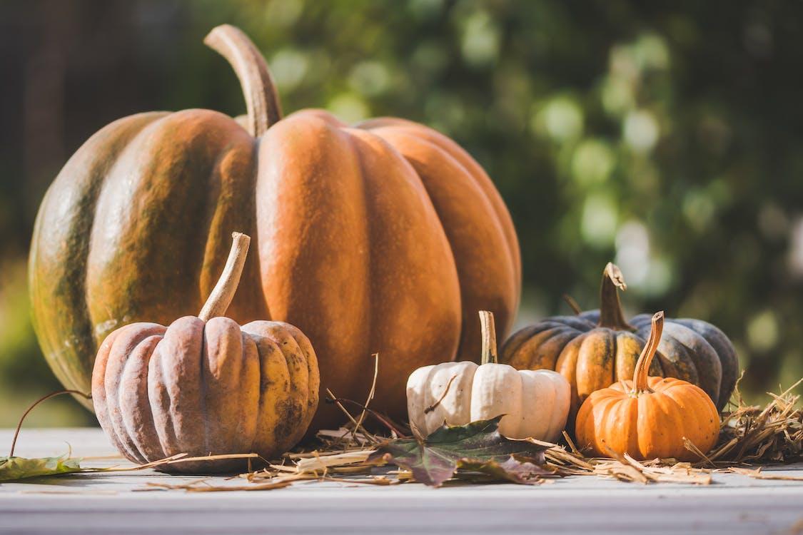 Pile of Pumpkin