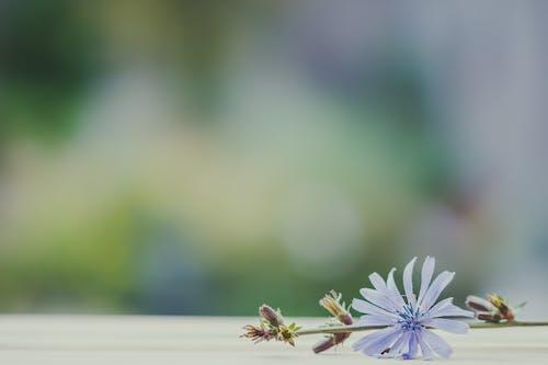 Foto stok gratis batang, berbayang, bunga, bunga biru