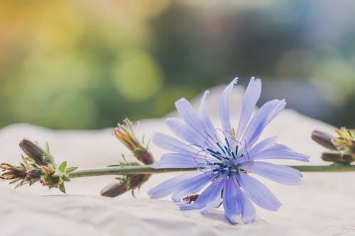 alan derinliği, bulanık, bulanıklık, çiçek içeren Ücretsiz stok fotoğraf