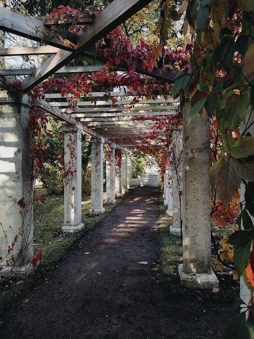 ガーデンライト, 秋の無料の写真素材
