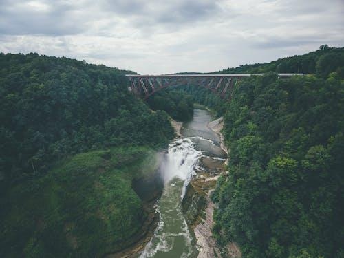 Foto d'estoc gratuïta de aigua, arbres, bosc, canal de riu