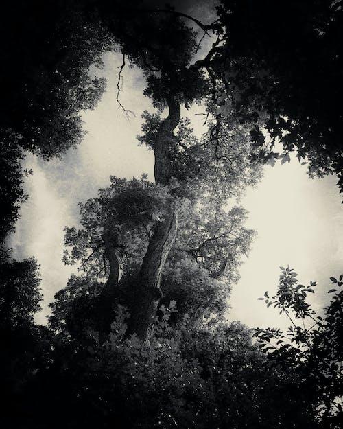 Free stock photo of sky, surreal, trees