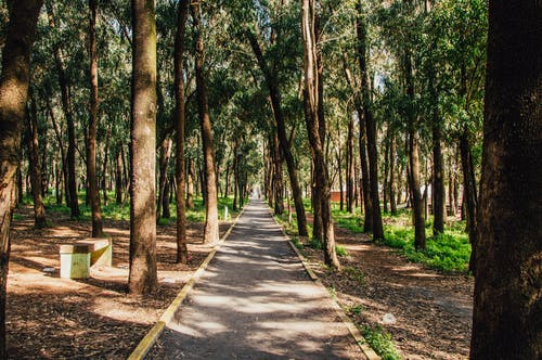 A Paved Pathway Surrounded By Trees