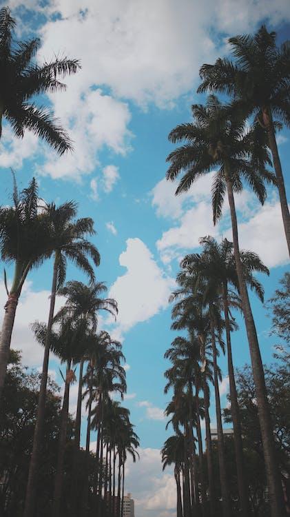 ต้นปาล์ม, ต้นมะพร้าว, ต้นไม้