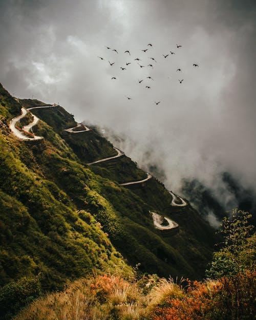 Foto d'estoc gratuïta de a l'aire lliure, bandada d'ocells, boira