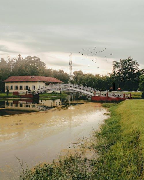 Kostnadsfri bild av assam, bro, damm, fåglar