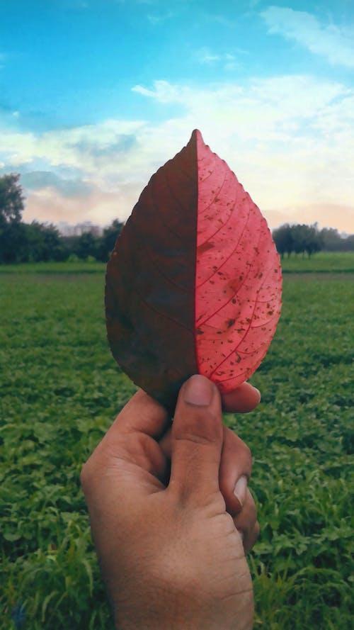 Free stock photo of #outdoorchallenge, Aditya, Aditya Singh, bicolor leaf
