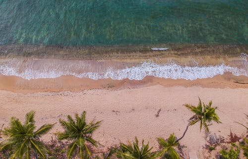 Bird's Eye View of Palm Trees by the Beach