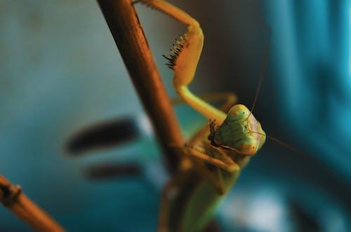 Foto stok gratis alam, belalang, berbayang, berfokus