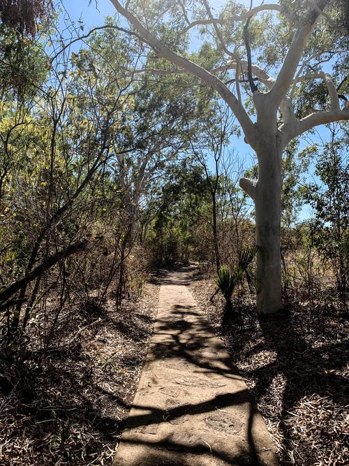 Free stock photo of gum trees, nature walk, outback, shadows