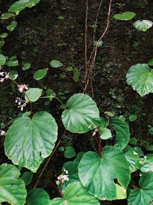 綠色, 美在自然中 的 免費圖庫相片