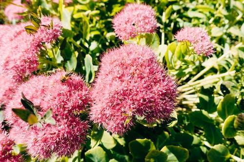 Fotos de stock gratuitas de caer, flor, fondo, naturaleza