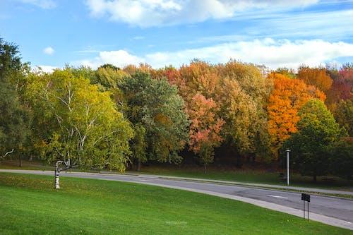 Free stock photo of autumn, autumn leaves, beatiful landscape, canada