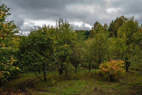 가을 색의 무료 스톡 사진