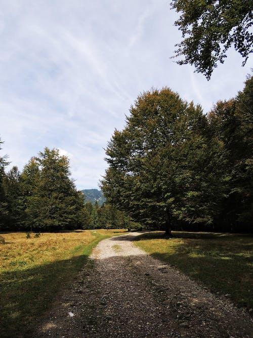 Gratis arkivbilde med blå himmel, fred, høstskog, mørk bakgrunn