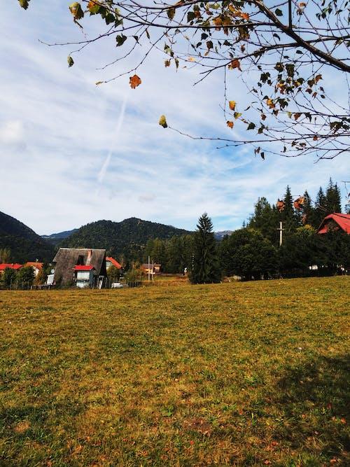 Gratis arkivbilde med blader, fjell, gul, høst