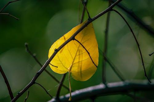 Бесплатное стоковое фото с легкий, лист, цвета осени