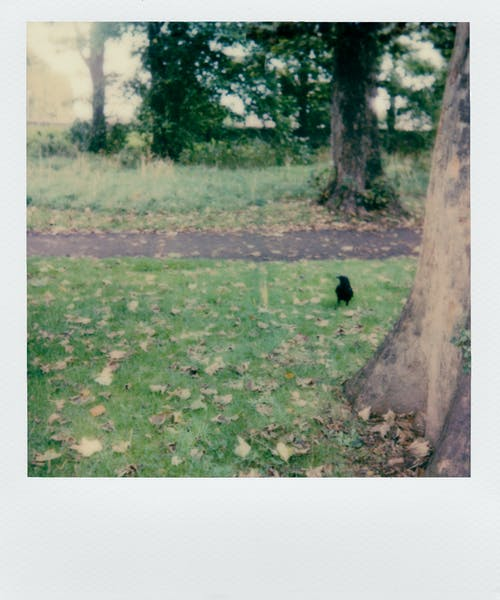 A Lone Bird On The Grass  With Scattered Dry Leaves Of Trees In the Park