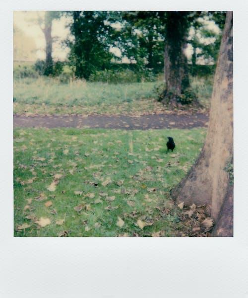 下落, 公園, 動物, 原本 的 免费素材照片