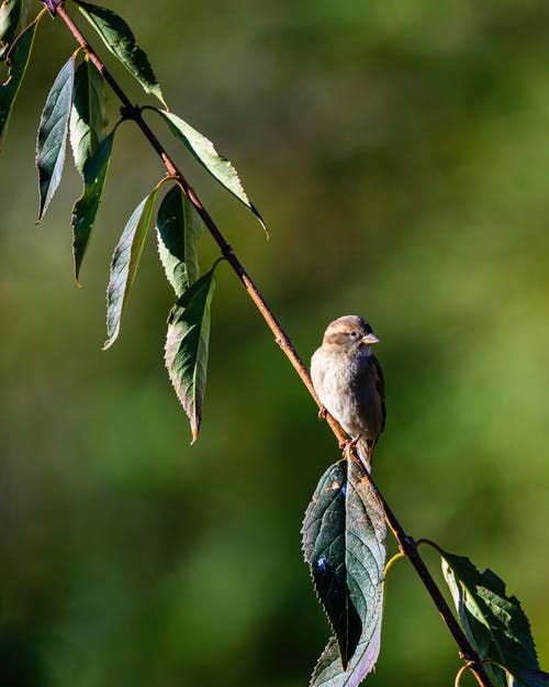 Selected-focus Photography of Short-beak Brown Bird in Tree Branch