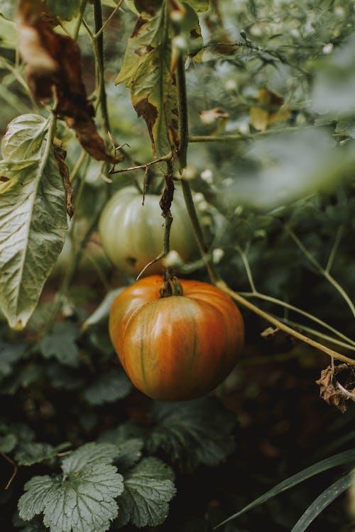 การทำฟาร์ม, การเกษตร, การเจริญเติบโต