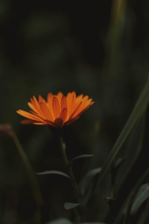 Close-up Photo of Orange Petal Flower