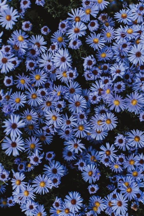 คลังภาพถ่ายฟรี ของ กลางแจ้ง, กลีบดอก, การตกแต่ง, การเจริญเติบโต