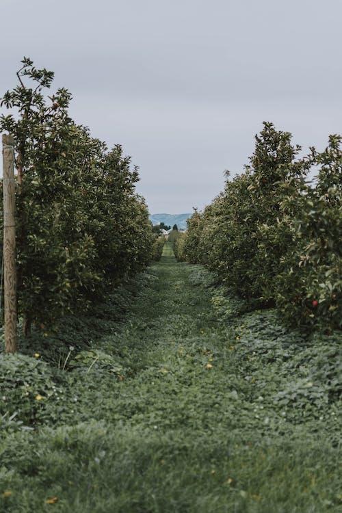 Photos gratuites de agriculture, arbres, campagne, chemin