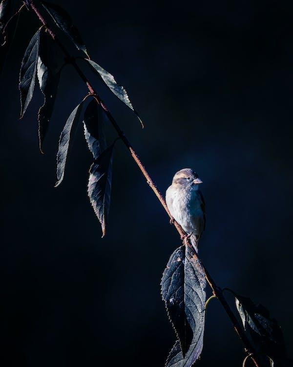 drzewo, dziób, fotografia zwierzęcia