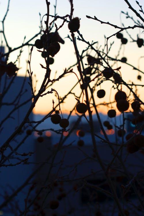 Ingyenes stockfotó hajnal, sziluett, városkép témában